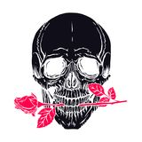 Human skull with a rose. Hand drawn illustration of anatomy human skull with a rose in his mouth Royalty Free Stock Photos
