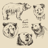 Hand drawn illustration of a bear in the different corners. Hand drawn vector vintage illustration of a bear, sketch animals bears old paper Royalty Free Stock Photos