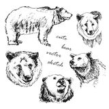 Hand drawn illustration of a bear in the different. Hand-drawn vector illustration of a bear in the different corners, sketch animals bears Royalty Free Stock Photos