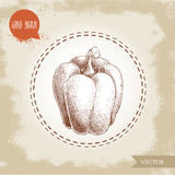 Hand drawn illustration of bell pepper. Sketch style vector capsicum. Royalty Free Stock Photo