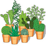 Hand drawn  illustration with cactuses. Vector illustration. Hand drawn colorful cactus set Stock Photo