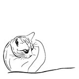 Hand drawn illustration, cat Royalty Free Stock Images
