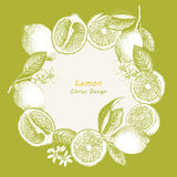 Hand drawn illustration with citrus fruits. Royalty Free Stock Photos