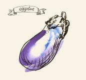 Hand drawn illustration of eggplant Royalty Free Stock Photography