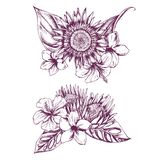 Hand drawn illustration of flowers and leaves. Highly detailed vector sketch royalty free illustration