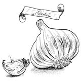 Hand drawn illustration with garlic isolated. Royalty Free Stock Photos