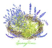 Bird nest with lavender flowers bunch royalty free stock photography