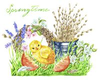 Funny chicken, egg shell, willow branch, young grass and flowers royalty free stock image