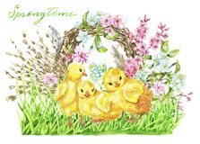 Funny chicken in green grass, bird nest, willow twig and flowers stock photography
