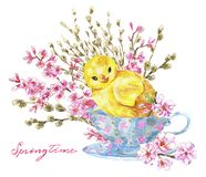 Funny chicken in old cup, blooming cherry tree flowers and willow branches stock image