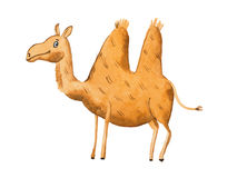 Hand drawn illustration of kind camel Watercolor Stock Photos