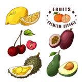 Hand drawn illustration of lemon, cherry, passionfruit, durian, avocado. Set og fruits. Colorful sketches elements. Royalty Free Stock Image