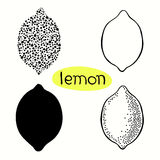 Hand drawn illustration of lemons isolated on white background. Stock Images