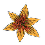 Hand drawn illustration of lily flower isolated Stock Photo