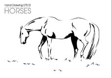 Hand drawn illustration od horse on meadow Royalty Free Stock Photos
