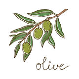 Hand drawn illustration of olives Stock Image
