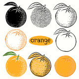 Hand drawn illustration of oranges  isolated on white background Royalty Free Stock Photography
