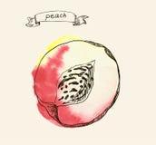 Hand drawn illustration of peach Stock Image