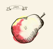 Hand drawn illustration of pear Stock Images