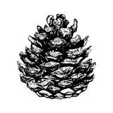 Hand drawn illustration of pinecone Stock Image