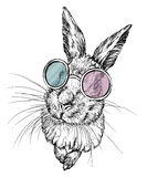 Hand drawn illustration of a rabbit in glasses. On white Stock Image