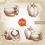 Hand drawn illustration set of bell peppers. Health eco food fresh farm drawing. Stock Image