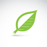 Hand-drawn illustration of simple beech tree leaf isolated.  Royalty Free Stock Image