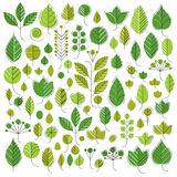 Hand-drawn illustration of simple tree leaves . Green fo Royalty Free Stock Photos