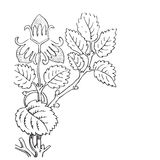 Hand drawn illustration of strawberry bushes . Branch with Stock Photo