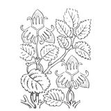 Hand drawn illustration of strawberry bushes . Branch with Royalty Free Stock Images