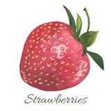 Hand drawn illustration of Strawberry Royalty Free Stock Photo