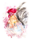 Hand drawn illustration watercolor rooster Royalty Free Stock Photos