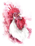 Hand drawn illustration watercolor rooster Royalty Free Stock Images