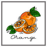 Hand-drawn illustrations. Card with fruit, oranges. Colorful postcard. Royalty Free Stock Image