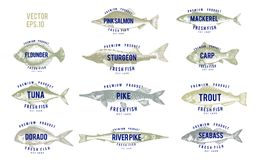 Hand drawn illustrations of fish with names in retro style over white background. Vector logo templates. Labels can be. Hand drawn illustrations of fish with Royalty Free Stock Photography