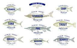 Hand drawn illustrations of fish with names in retro style over white background. Vector logo templates. Labels can be Stock Photography