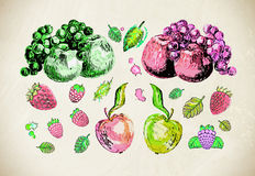 Hand drawn illustrations of fruits, berries Royalty Free Stock Photo