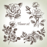 Floral set. Hand drawn illustrations of roses Royalty Free Stock Image