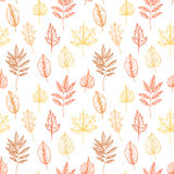 Hand drawn illustrations. Seamless pattern with leaves. Forest b Stock Image