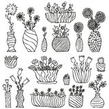 Hand drawn indoor plants in a pots, gloxinia, balsam, tulip, aster Royalty Free Stock Photography
