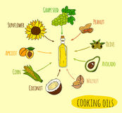 Hand drawn infographic of cooking oil sorts. Different kinds of edible vegetable food oils. With origin products olive, apricot, corn, grape seed, walnut Stock Photos