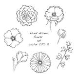 Hand drawn ink flower sketch set. Gerbera, succulent, dog-rose Royalty Free Stock Photos