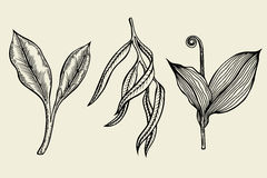 Hand drawn ink sketch spring branches Stock Images