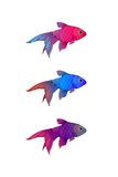 Hand-drawn ink-stylized little aquarium fishes. Hand-drawn ink-stylized little colorful aquarium fishes  on white Stock Photography