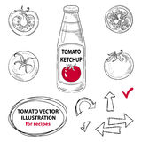 Hand drawn ink tomatoes sketches set Stock Images