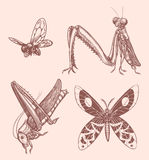 Hand drawn Insects  Royalty Free Stock Images