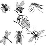 Hand-drawn insects Stock Image