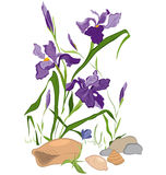 Hand drawn Iris blooms. Hand drawn illustration of Iris blooms flowers isolated on white Royalty Free Stock Images