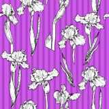 Iris violet pattern Royalty Free Stock Images