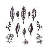 Hand drawn isolated black graphic leaves set royalty free illustration
